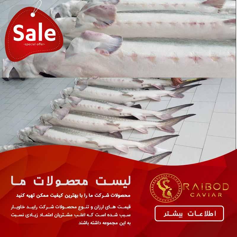 صادرات ماهی خاویار
