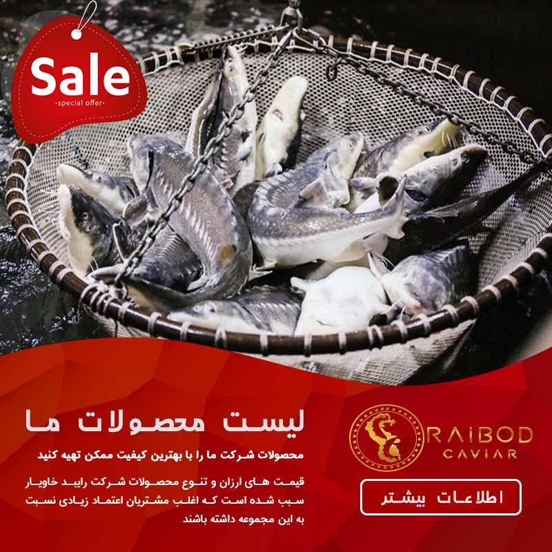 صید انواع ماهی خاویاری