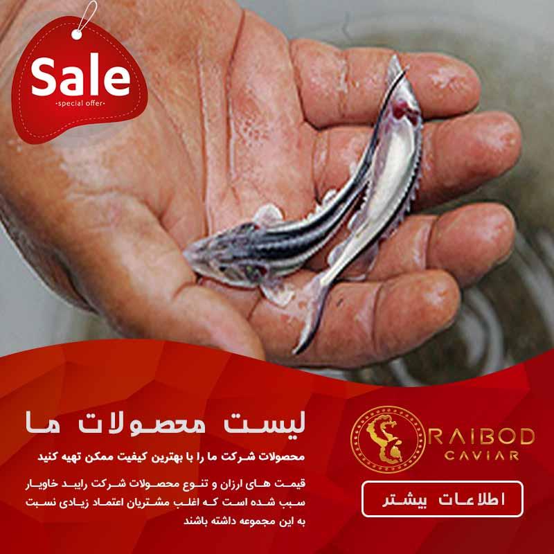 قیمت بچه ماهی خاویار زنده