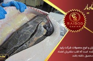 تولید کنندگان خاویار در بازار ایران