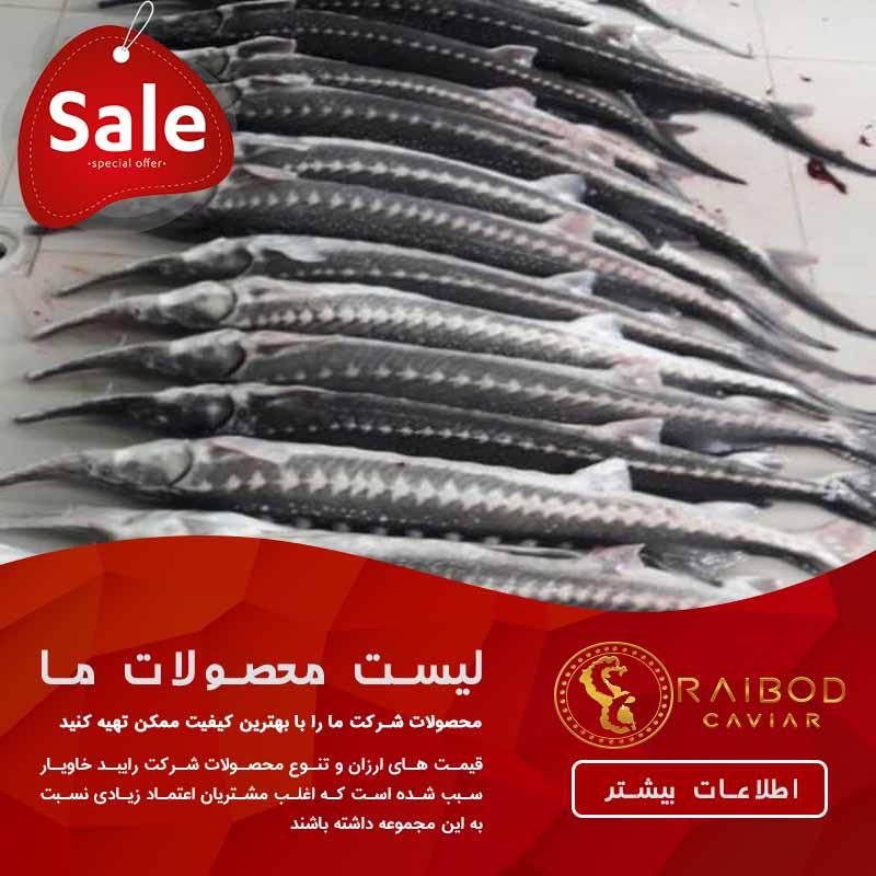 وارد کنندگان اصلی ماهی خاویار پرورشی ایران